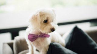 Male Dog Names: Top 320 Boy Dog Names of 2018