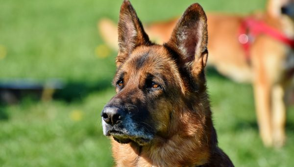 142 Best Regal Dog Names of 2018 with Popularity