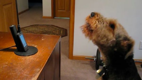 Lonely Dog 'Sings' to Mom on Speakerphone in Heartwarming Video
