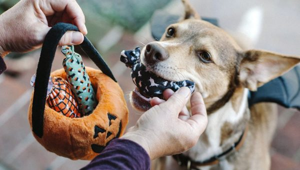7 Halloween Dog Toys Perfect for Tricks or Treats