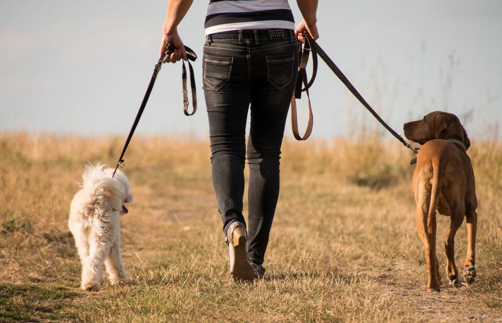 promenade avec deux chiens en laisse