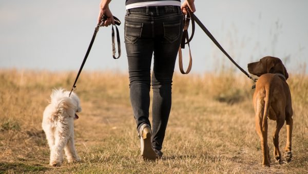 How to Stop Your Dog Pulling on Their Lead