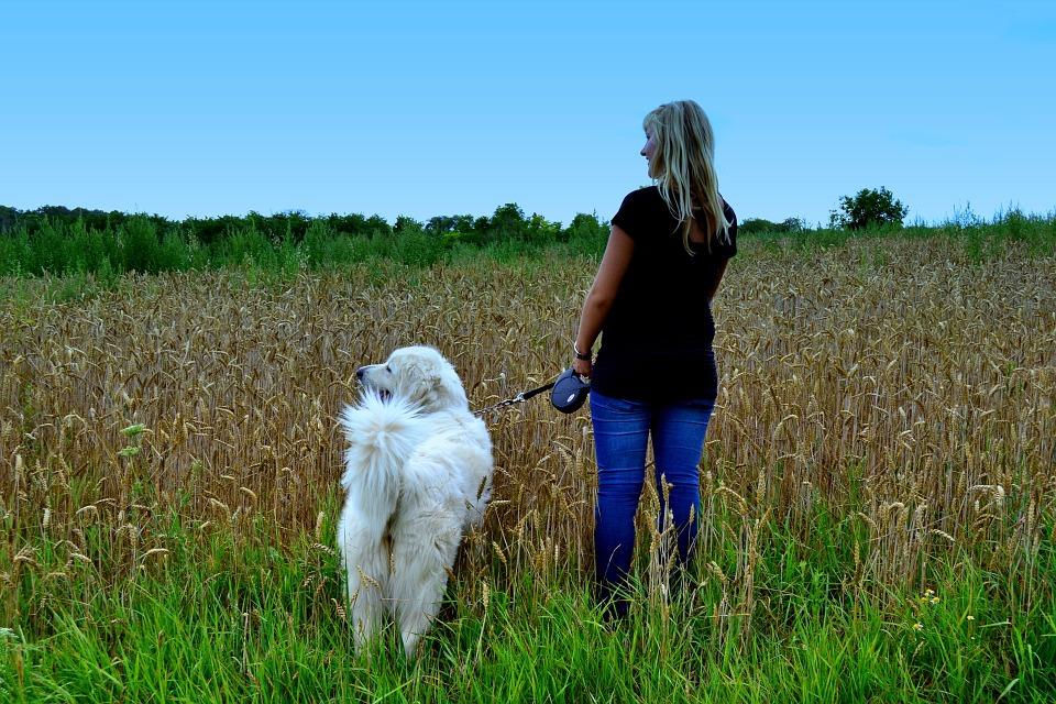 femme en train de promener son chien dans les champs