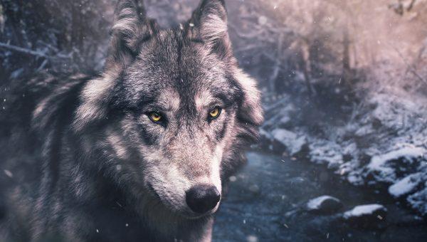 75 Best Alaskan Dog Names