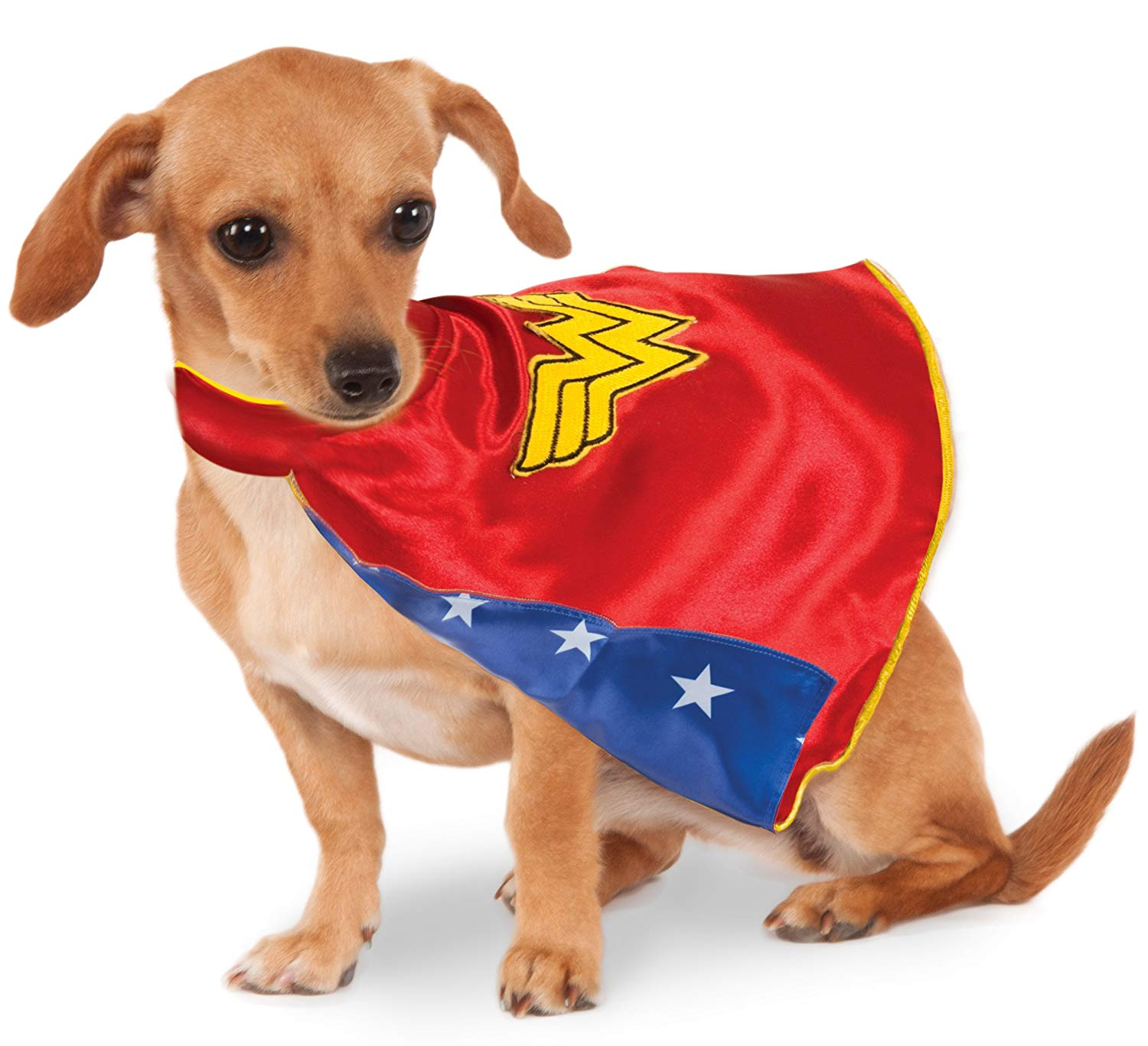 capes for dogs a dog wearing a Wonder Woman cape