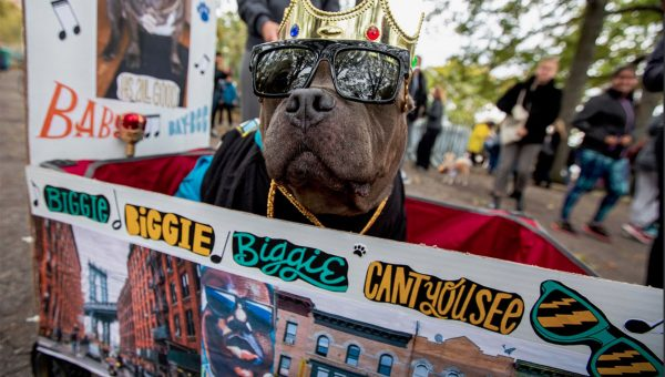 10 Costumes You Need to See from the Tompkins Square Halloween Dog Parade
