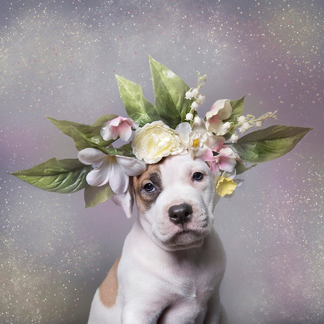The 101 Most Popular Pit Bull Names of 2018 | The Dog People