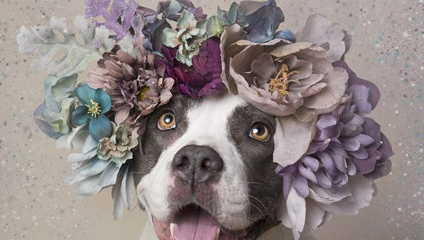 Breathtaking Flower Crown Photos Help Adoptable Pit Bulls Find Homes