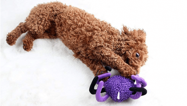 10 Halloween Dog Toys We Love for Under $10