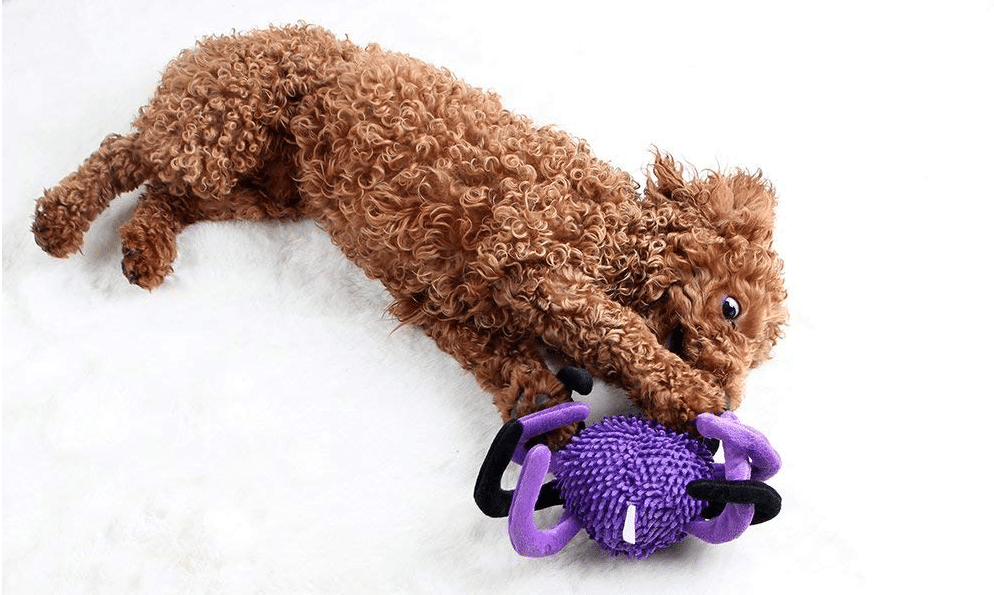 91b34135c424 10 Halloween Dog Toys We Love for Under $10 | The Dog People by Rover.com