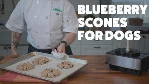 blueberry toasted oat scones for dogs recipe HERO