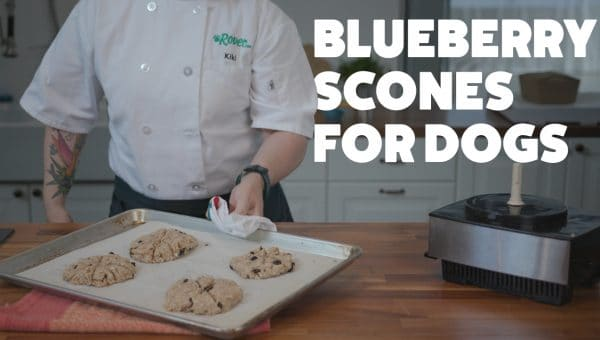 Homemade Toasted Oat Blueberry Scones for Dogs Who Dream of Tea Parties