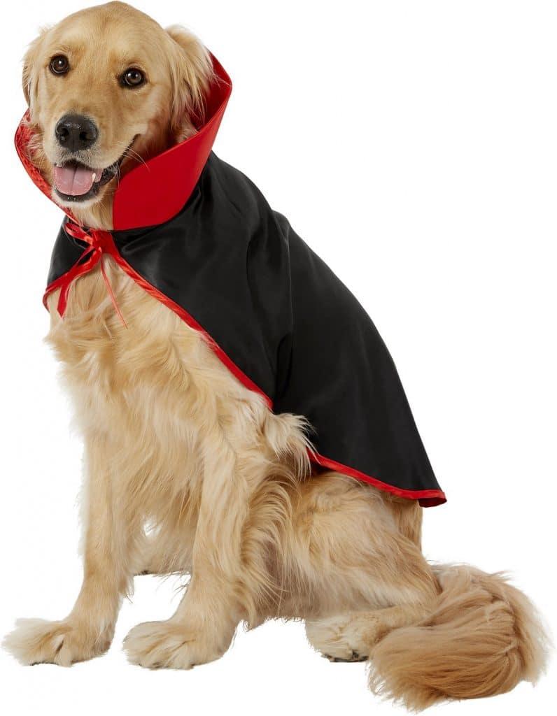 Vampire scary dog costume