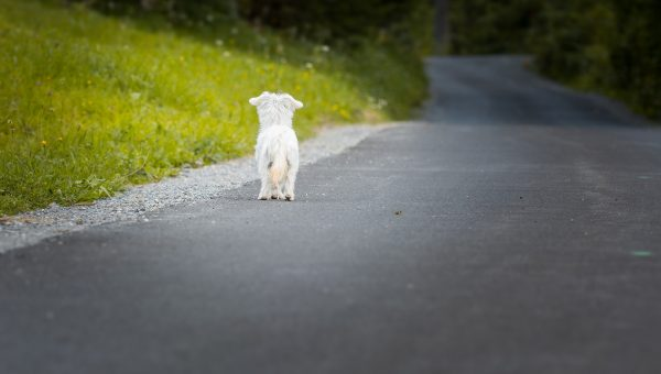 Do Dogs Experience Grief? Here's What Science Says