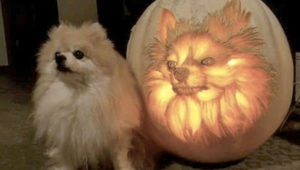 11 Brilliant Dog-Themed Jack-O'-Lanterns to Get You in the Pumpkin Carving Mood