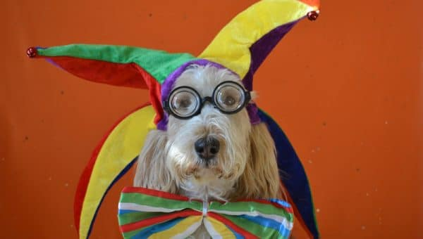 8 Funny Dog Costumes to Get Your Pet in the Halloween Spirit