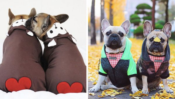 Frenchie Power Couple Are Simultaneously #RelationshipGoals and Fashion Icons