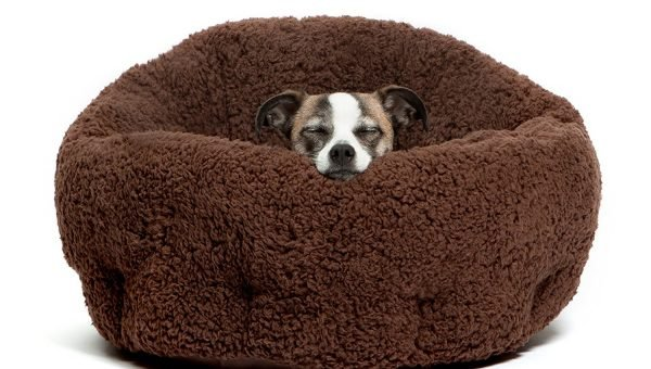 The 8 Best Heated Dog Beds for Your Chilly Pet