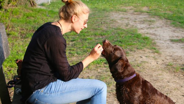 How to Teach a Fearful Dog to Love Again: A Trainer's Guide to Bonding with Your Rescue Dog