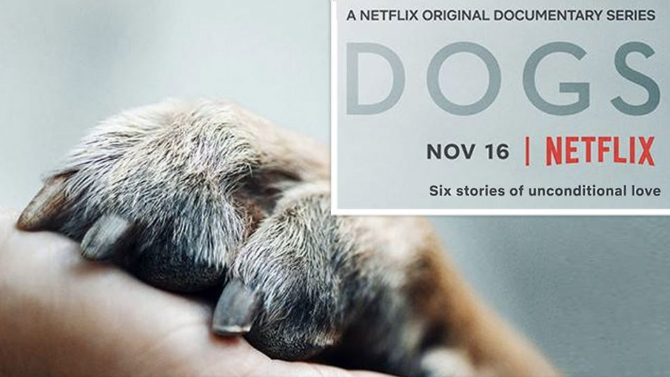 Netflix Drops Trailer for New Dog Documentary Series and It