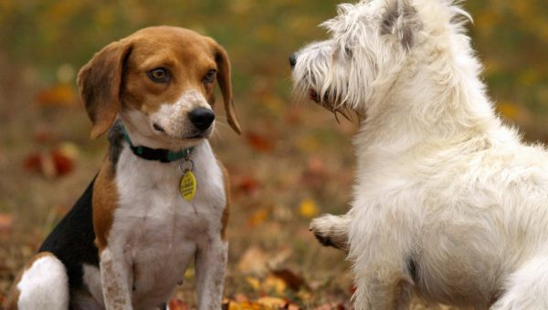 Poisonous Plants for Dogs in the Midwest