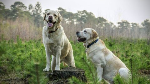 plants poisonous for dogs in the northeast