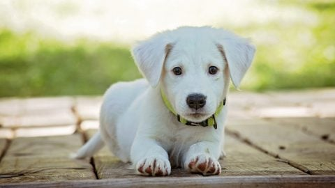 plants poisonous to dogs in the southwest