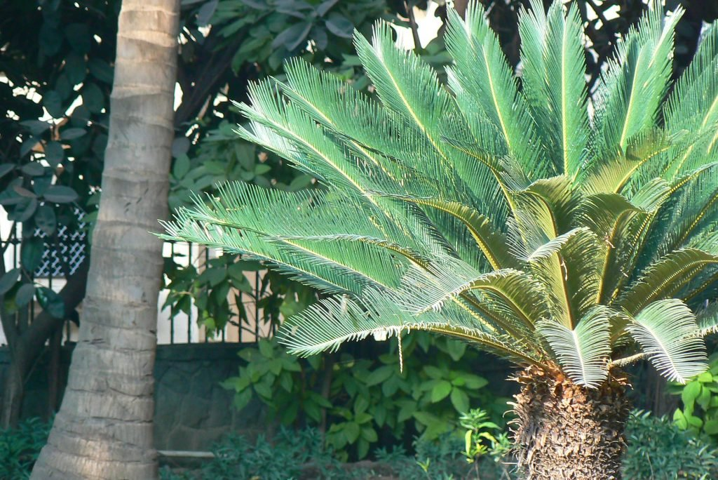 poisonous plants for dogs in the southwest sago palm