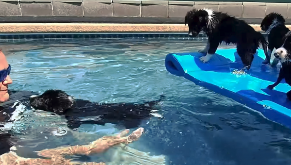 Private Dog Pool Shares Adorable Footage of Puppies Swimming for the First Time