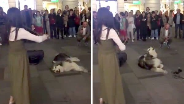 Malamute Suddenly Starts Singing Along with a Street Violinist in Sweet Video
