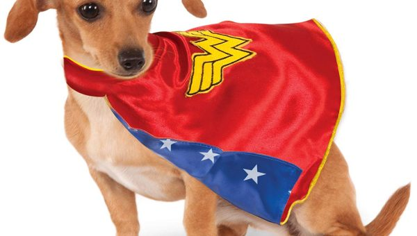 Capes for Dogs Are Surprisingly Fun and Comfy—and Sometimes Even Practical