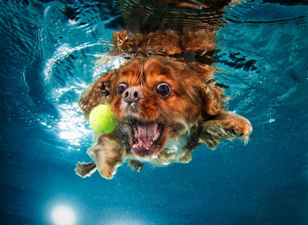 underwater dogs photo