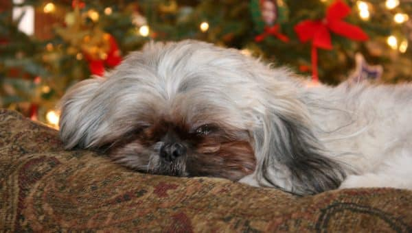 12 Best Gifts for Shih Tzu Lovers