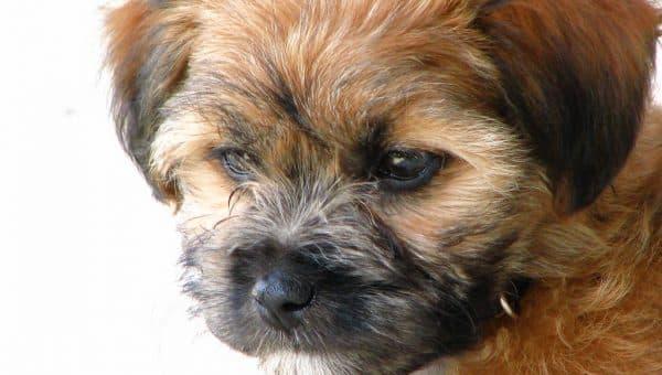 25 hundar som inte fäller