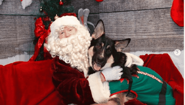 How to Get the Best Santa Photos with your Dog
