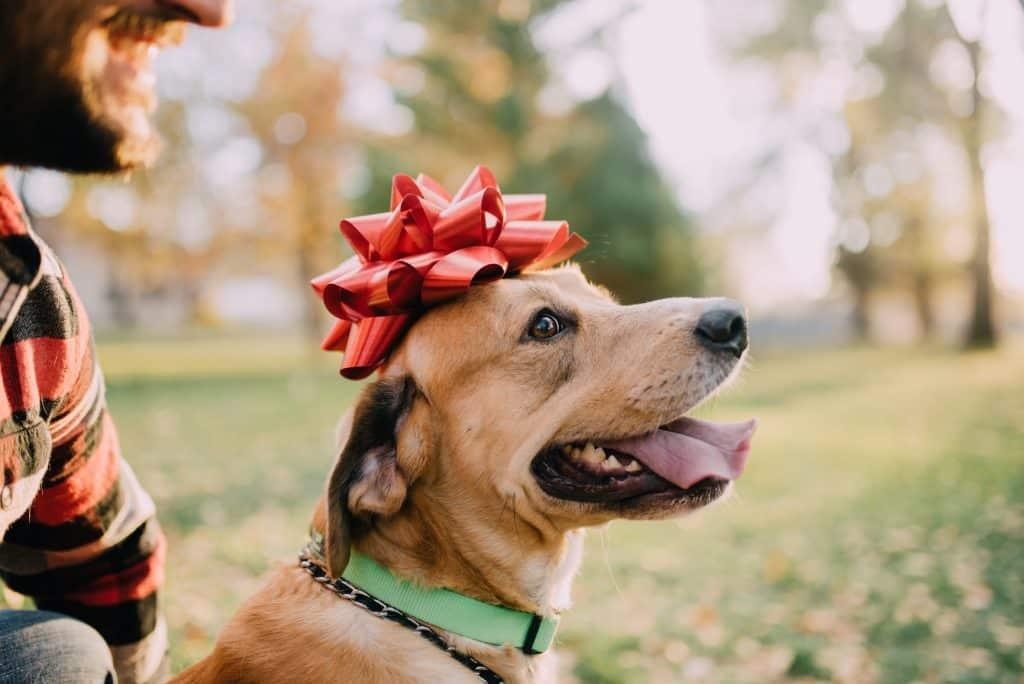 dog with christmas bow smiling
