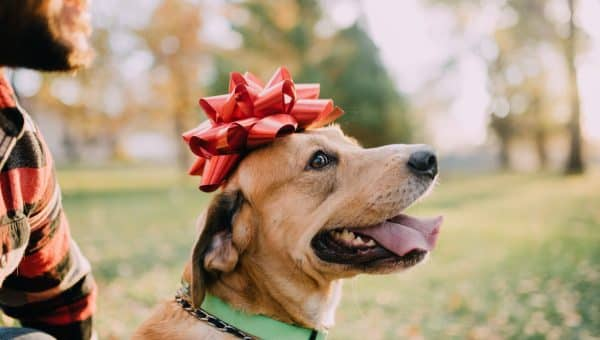 17 Festive Christmas Collars to Deck the Dog for the Holidays