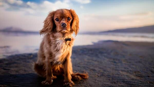 San Diego's Top Dog Names of 2018