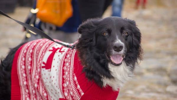 12 Best Gifts for Collie Lovers