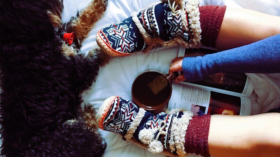 Cozy dog and tea