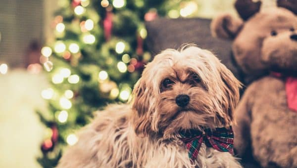 How Your Dog Can Help You Stay Stress-Free During the Holidays
