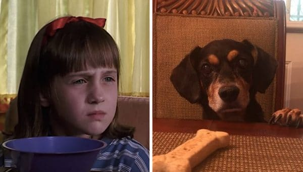 7 Dogs Take on the #MatildaChallenge in Magical Videos That Mimic a Famous Movie Scene
