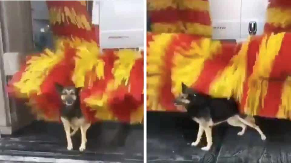 Clever German Shepherd Helps Herself To Free Spa Treatments At Car Wash Video The Dog People By Rover Com