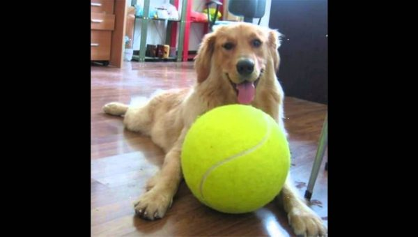 10 Big Dog Toys for our Big Furry Babies Who Can't Stop, Won't Stop