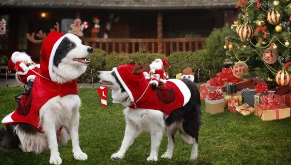 Best Holiday Photo Props for Your Dog