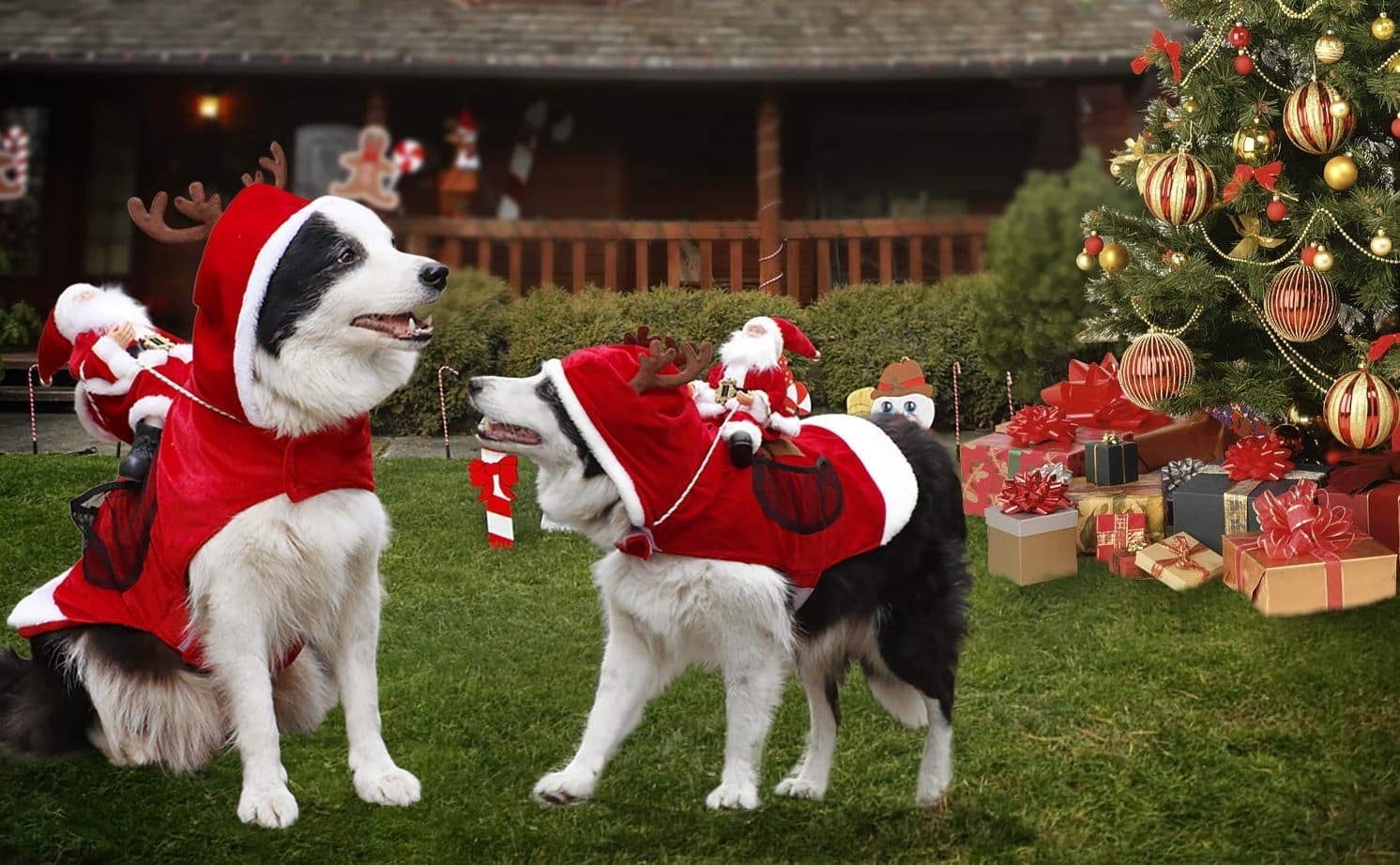 Best Holiday Photo Props for Your Dog 8c6efee20