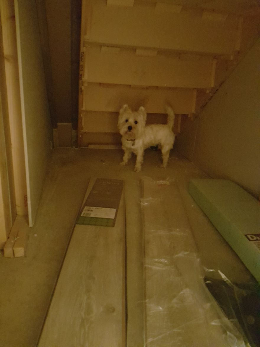 Molly westie bedroom under the stairs