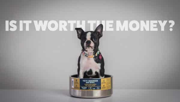 Yeti Boomer Dog Bowl: Is It Worth the Money? [Video Review]