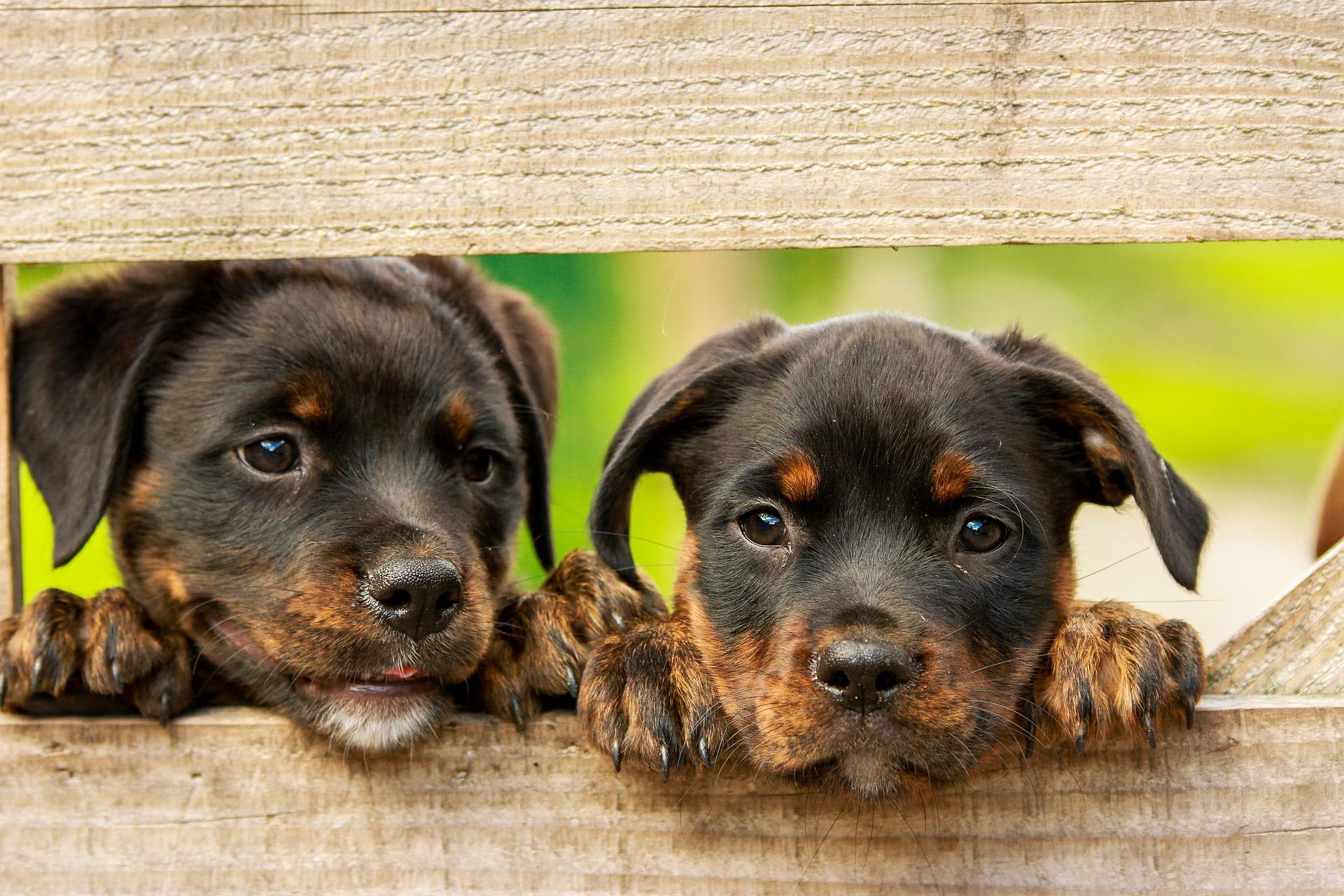 55+ Girl Rottweiler Names