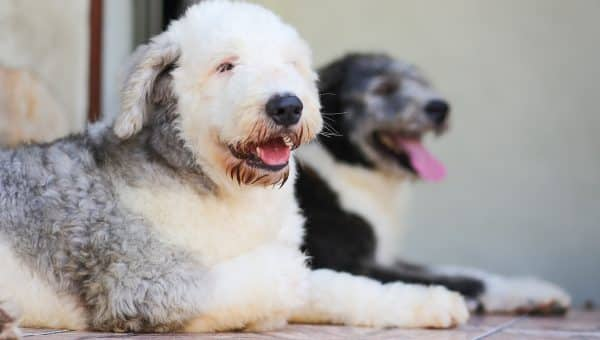 194 Best Dog Names Starting with D by Popularity   The Dog
